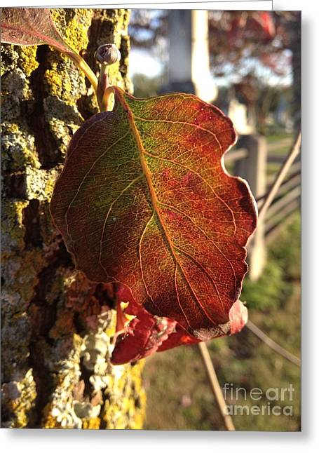 Gnarly Greeting Cards - Stained Glass Leaf Greeting Card by Paula Talbert