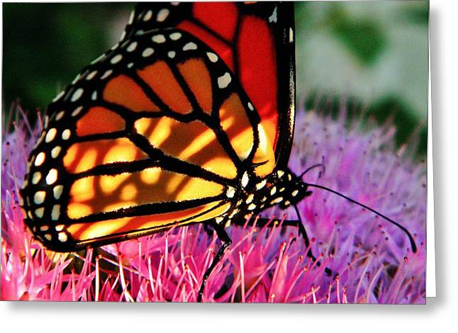 Pollinator Greeting Cards - Stained Glass Monarch  Greeting Card by Chris Berry