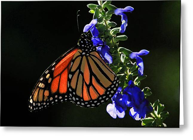 Canon 7d Greeting Cards - Stained Glass Wings Greeting Card by Donna Kennedy