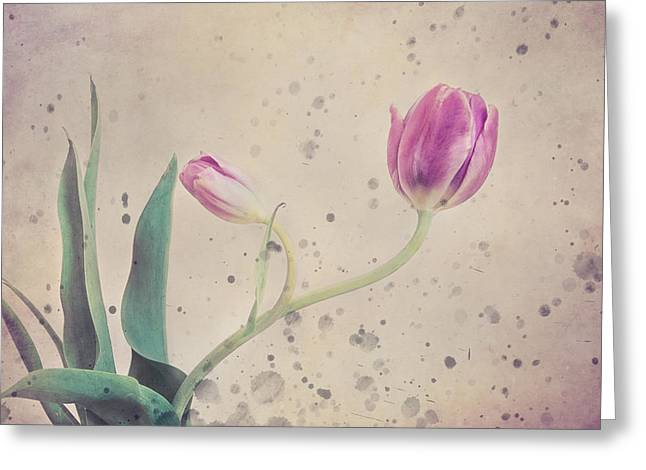 Bloosom Greeting Cards - Stained tulip Greeting Card by Cristina-Velina Ion