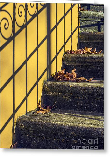 Shadows Greeting Cards - Stairs With Leaves Greeting Card by Carlos Caetano