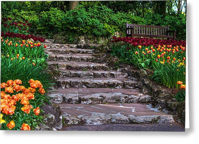 Crazing Greeting Cards - Stairs with Tulips. Keukenhof Garden. Netherlands Greeting Card by Jenny Rainbow