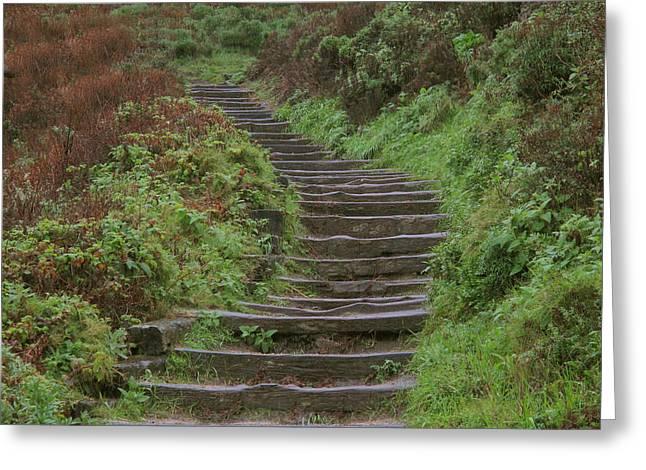 Point Lobos Greeting Cards - Stairway To Heaven Greeting Card by Derek Dean