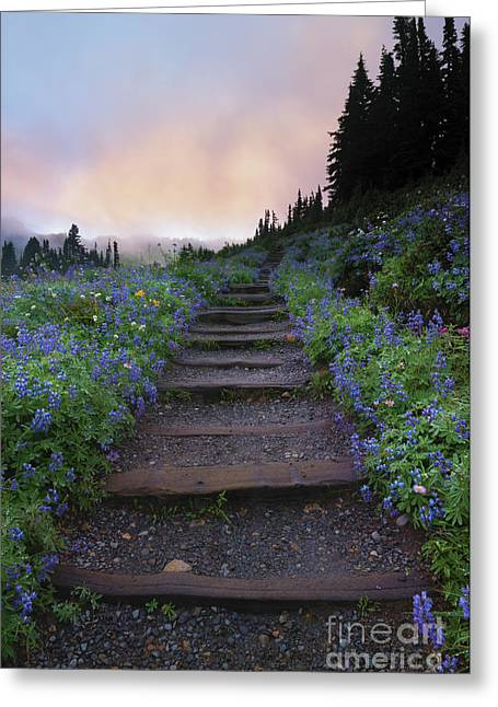 Stairways Greeting Cards - Stairway to the Heavens Greeting Card by Mike Dawson