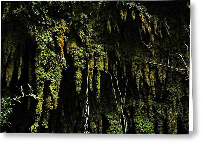Stalactites At The Entrance To Las Cuevas De Camuy Greeting Card by Sandra Pena de Ortiz
