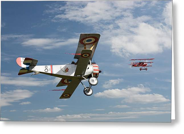 Triplane Greeting Cards - Stalked Greeting Card by Pat Speirs
