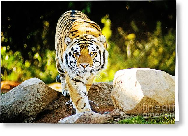 The Tiger Greeting Cards - Stalker Greeting Card by Scott Pellegrin