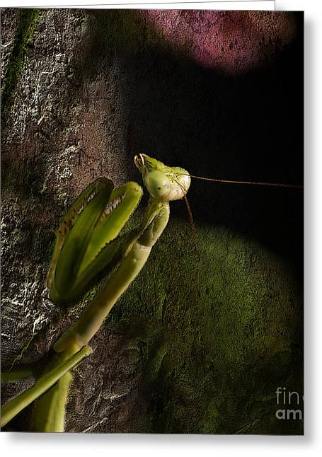 Preying Mantis Greeting Cards - Stalking Greeting Card by Betty LaRue