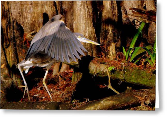 Great Blue Heron Framed Print Greeting Cards - Stalking Great Blue Heron 1 Greeting Card by Sheri McLeroy