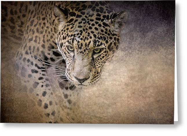 Original Art Photographs Greeting Cards - Stalking Her Prey - Wildlife - Leopard Greeting Card by Jai Johnson