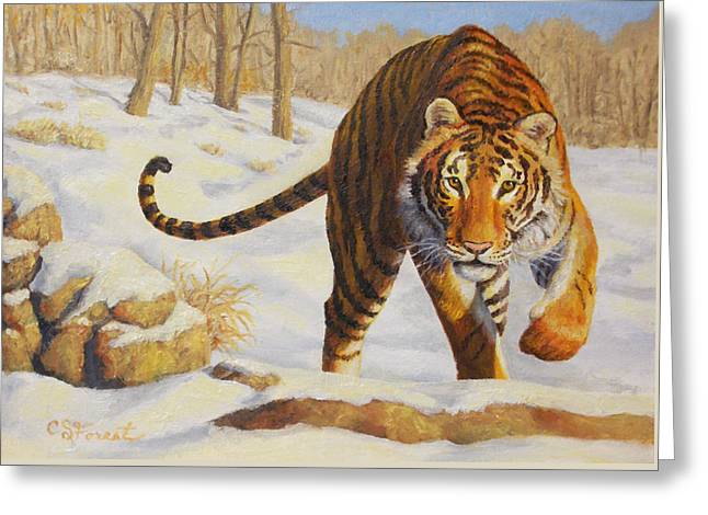 Stalking Siberian Tiger Greeting Card by Crista Forest