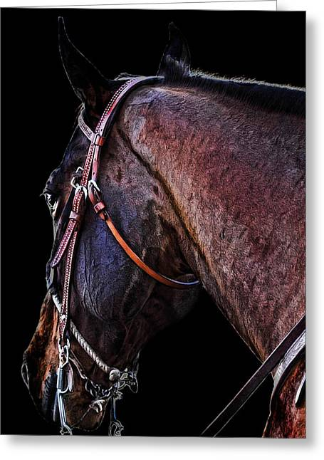 Race Horse Greeting Cards - Stallion Greeting Card by Camille Lopez