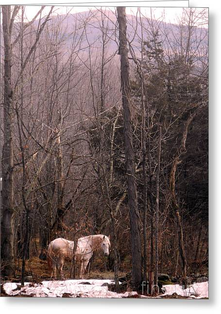 Stallion In The Mountain Pasture Greeting Card by Patricia Keller