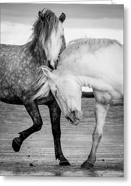 Beach Photography Greeting Cards - Stallions of the Carmargue Greeting Card by Tim Booth