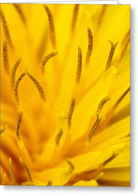 Stamen Greeting Cards - Stamens Greeting Card by Daniel Csoka
