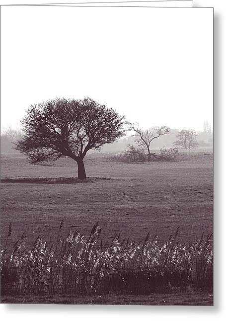 Bare Trees Greeting Cards - Stand alone Greeting Card by Sharon Lisa Clarke