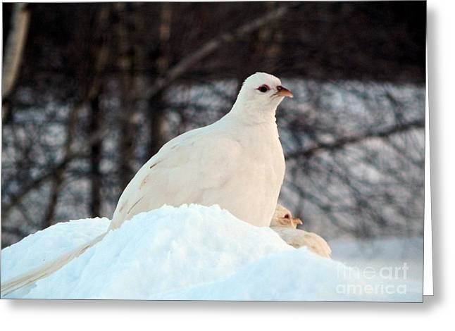 Annapolis Valley Greeting Cards - Stand by me Greeting Card by Karen Cook