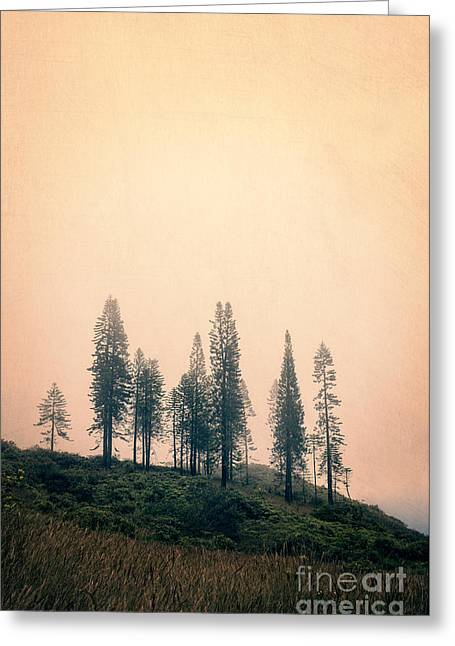 Viewpoint Greeting Cards - Stand of trees along the Waihee Ridge Trail Greeting Card by Edward Fielding