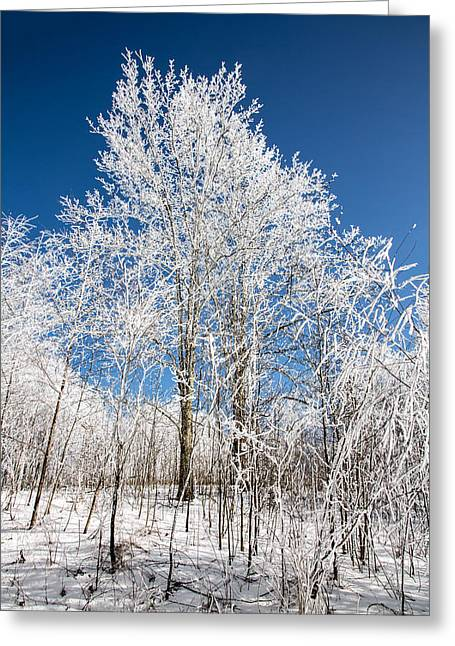 Western North Carolina Greeting Cards - Stand Tall Greeting Card by John Haldane