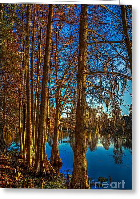 Cypress Greeting Cards - Stand Tall Greeting Card by Marvin Spates