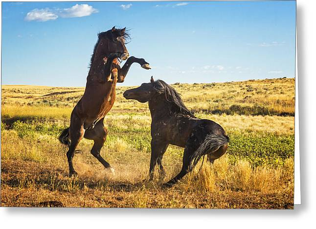 Stand Your Ground Greeting Card by Elaine Haberland