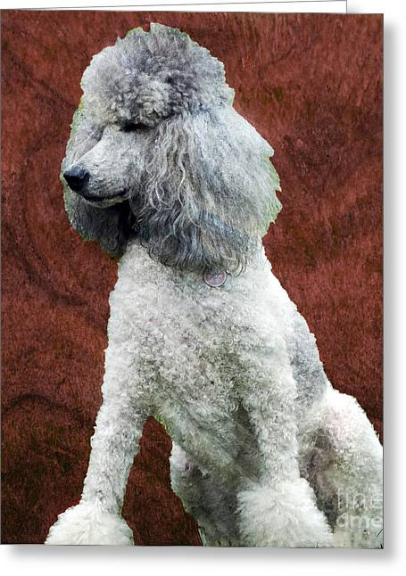 Hypoallergenic Greeting Cards - Standard Poodle Greeting Card by Gena Weiser