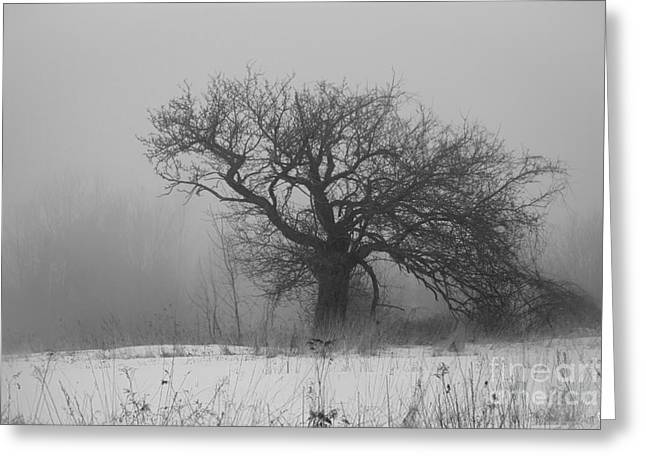 Snowy Day Greeting Cards - Standing Alone Greeting Card by Alana Ranney