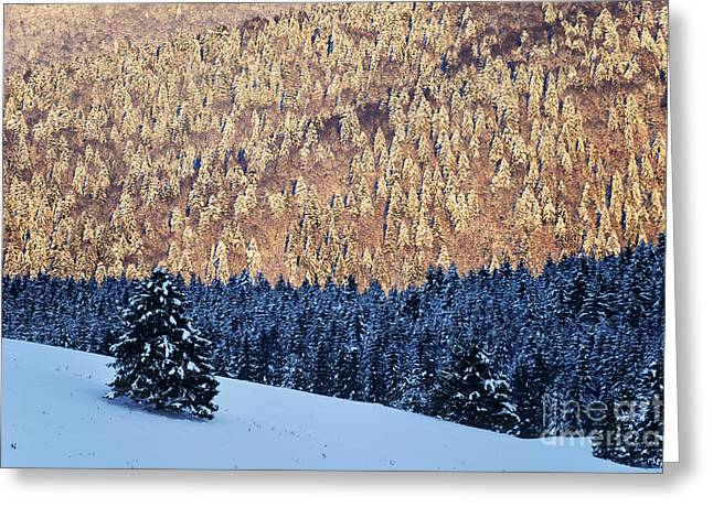 Snow-covered Landscape Greeting Cards - Standing alone Greeting Card by Yuri Santin