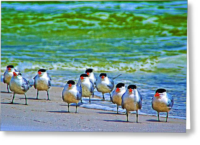 Tern Greeting Cards - Standing Guard Greeting Card by Gail Barsh