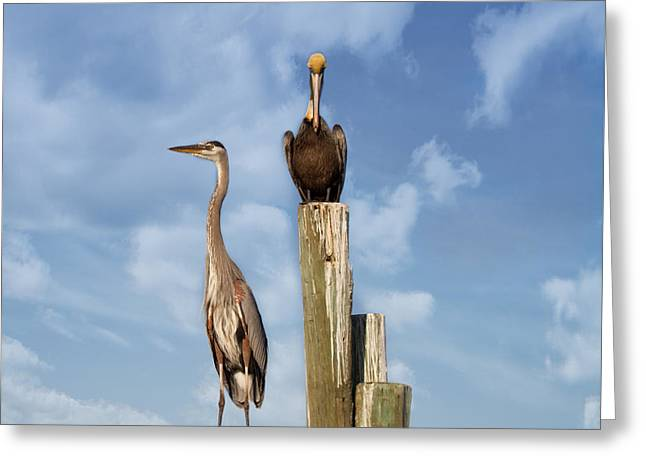 Grey Clouds Greeting Cards - Standing Guard Greeting Card by Kim Hojnacki