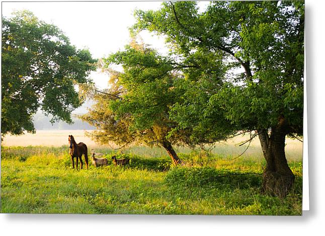 Barn Landscape Photographs Greeting Cards - Standing His Ground Greeting Card by Shelby  Young