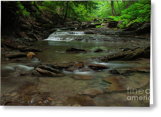 Standing In The Stream Greeting Card by Steve Clough