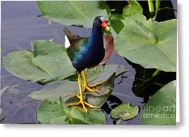 Blue Green Water Greeting Cards - Standing On Bonnet Lillies Greeting Card by Chuck  Hicks