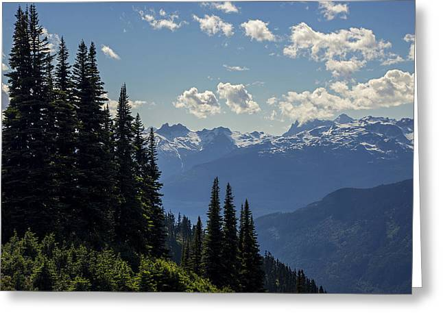 Pines Greeting Cards - Standing Proud Greeting Card by Aaron S Bedell