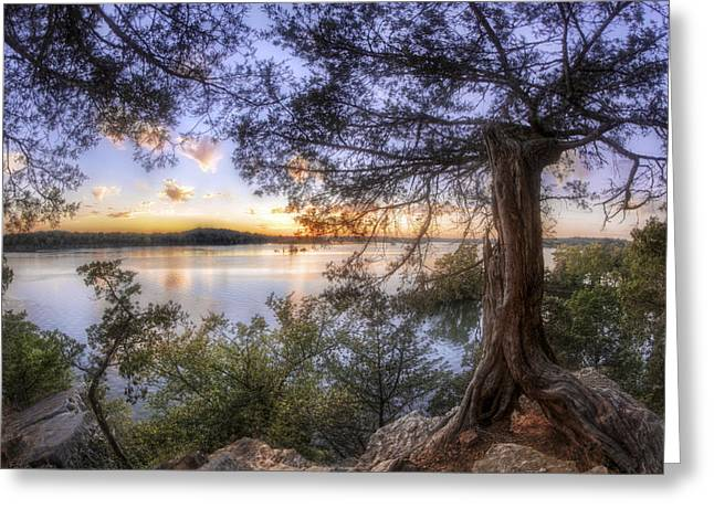 Gnarly Greeting Cards - Standing Sentinel - Arkansas - Cadron Settlement Park Greeting Card by Jason Politte