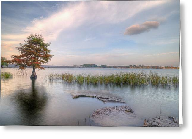Fall Grass Greeting Cards - Standing Tall Against All Greeting Card by Franklyn Cabahug
