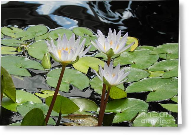 Flower Still Life Prints Greeting Cards - Standing Tall Greeting Card by Chrisann Ellis
