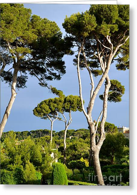 South Of France Greeting Cards - Standing Tall Greeting Card by Corinne Rhode