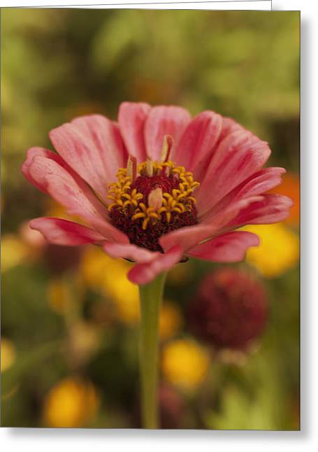 Deutschland Greeting Cards - Standing Tall Greeting Card by Miguel Winterpacht