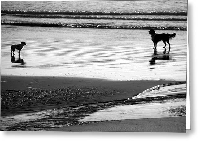 On The Beach Greeting Cards - Standoff At The Beach Greeting Card by Aidan Moran