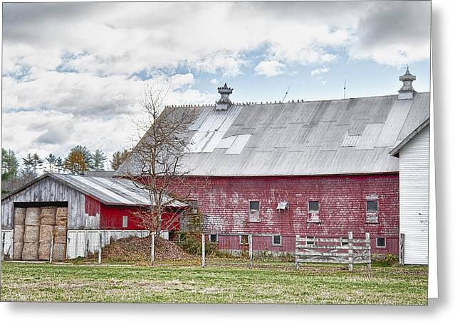 Maine Farms Greeting Cards - Stands With Dignity Greeting Card by Richard Bean