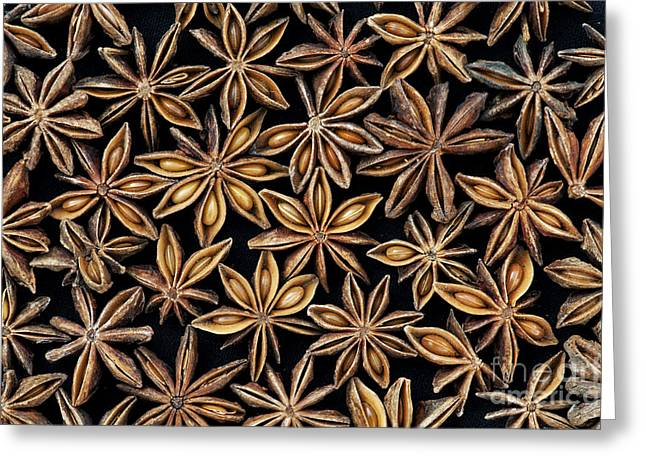 Star Shape Greeting Cards - Star anise pattern Greeting Card by Tim Gainey