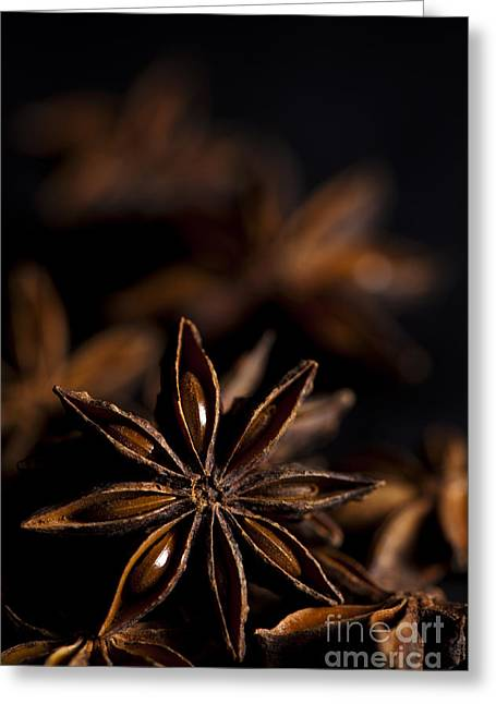 Aniseed Greeting Cards - Star Anise Study Greeting Card by Anne Gilbert