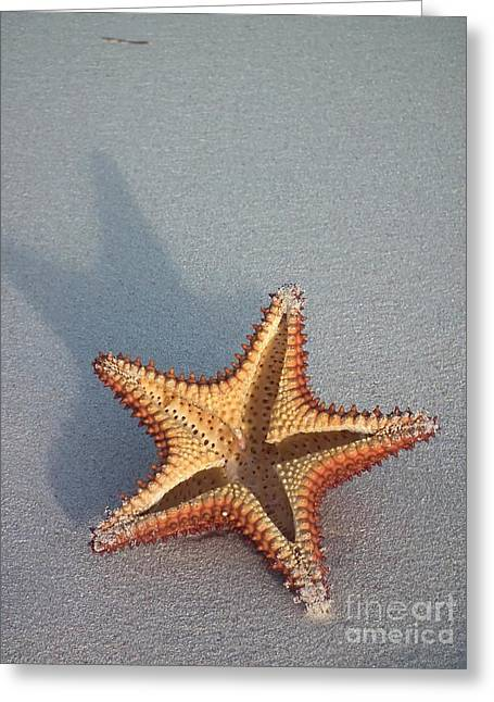 Star Fish Greeting Card by Sophie Vigneault