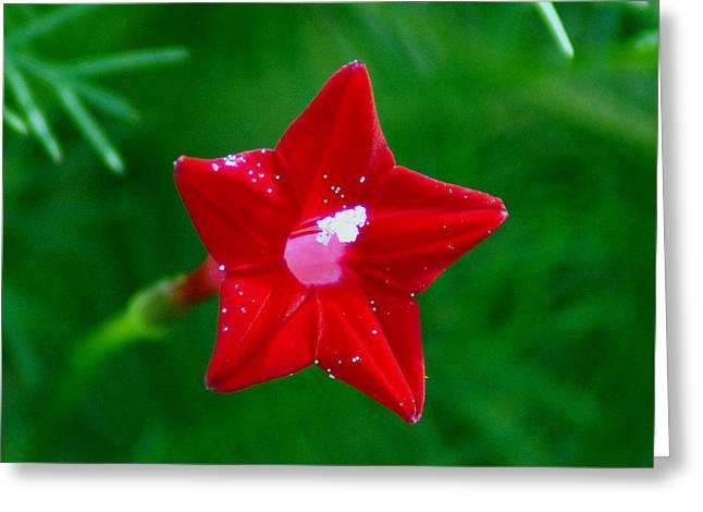 Star Glory Greeting Card by Kim Pate