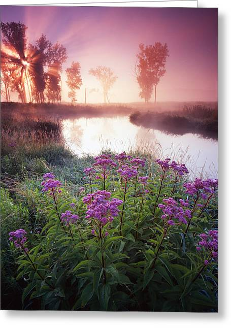Hack-ma-tack National Wildlife Refuge Greeting Cards - Star in the Fog Greeting Card by Ray Mathis