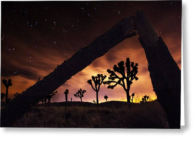Ming Huang Greeting Cards - Star night in Joshua Tree National Park Greeting Card by Ming Huang