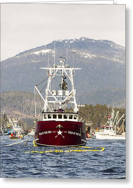 Seasons.net Greeting Cards - Star of the Sea Greeting Card by Tim Grams