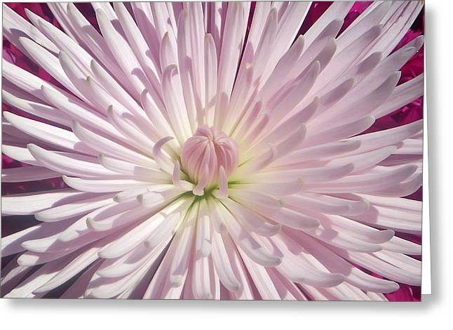 Starburst  Greeting Card by Aimee L Maher Photography and Art Visit ALMGallerydotcom