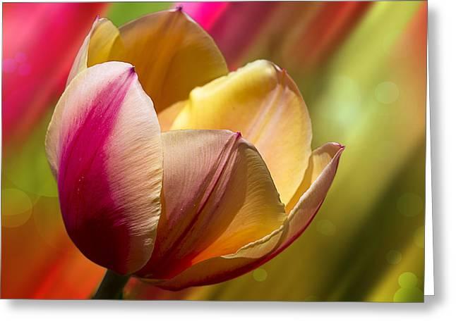 Crisp Digital Art Greeting Cards - Starburst Tulip Greeting Card by Bill Tiepelman